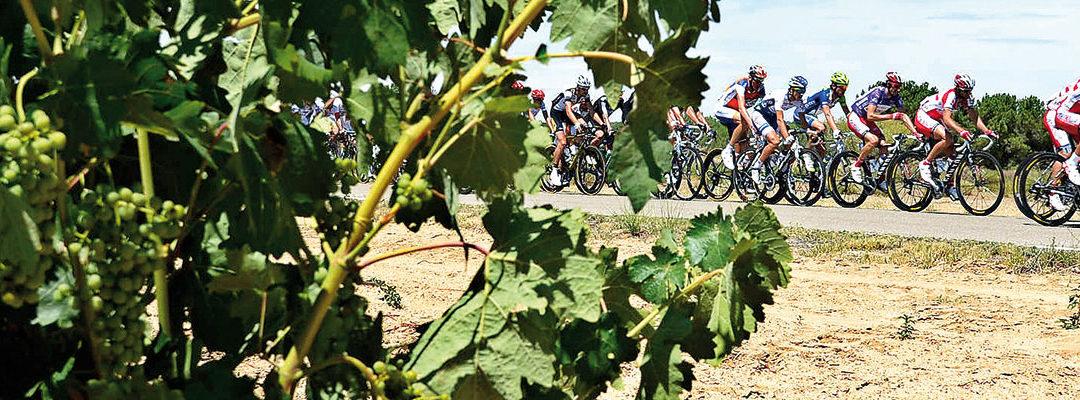 Pelotón ciclista a su paso por tierras de viñedos